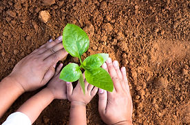 Kid hand and father planting young plant