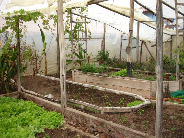 Growing Vegetables at the Casa de Miraglos