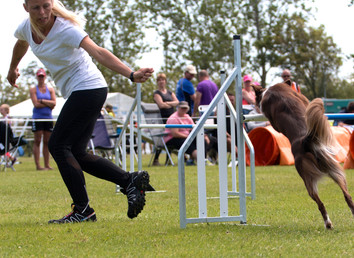 Agility Sommerhold 2017