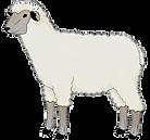kisspng-sheep-predicate-adjective-goat-clip-art-5d29f501aa7055_edited.png