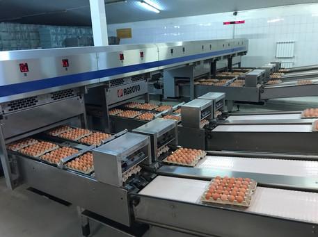 Транспортировка яйца в цех реализации