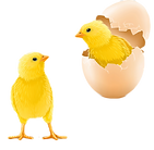 kisspng-photography-egg-royalty-free-poussin-5b254f5a026c13_edited.png