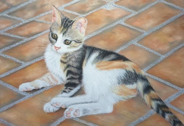 Cat Portraits - Cally