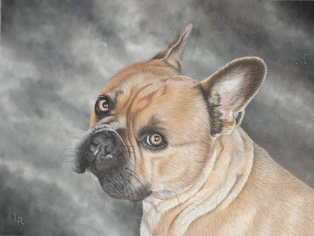 Sidney the Frenchie