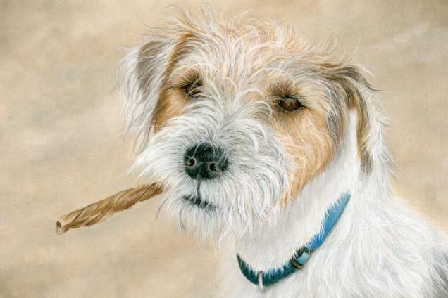 Pet Portrait from Photo - Al