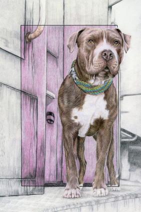 Dog Portrait Painter - This is Bella