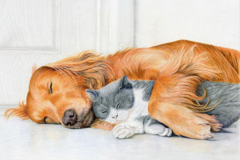Sleep Budddies