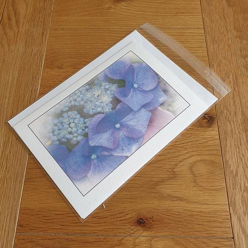Blue Hydrangea greeting card /wall art/notelet