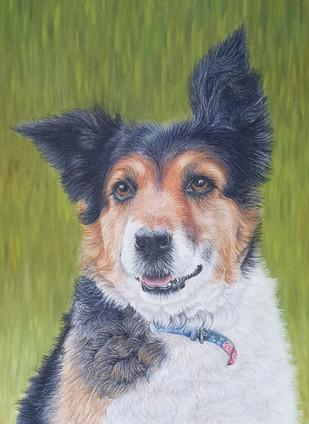 Spirit - dog portraits Wiltshire