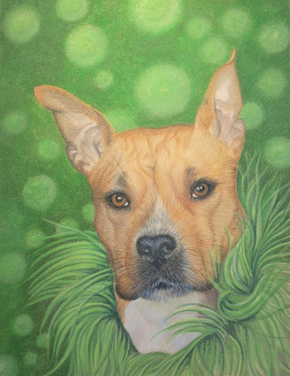 Pet Paintings - Yoda with Boa