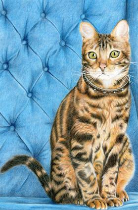 Marcie - Cat Portrait