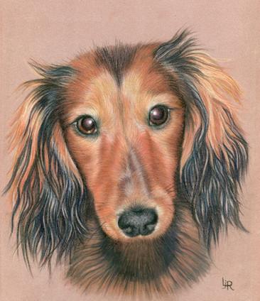 Dog Portraits - Dax