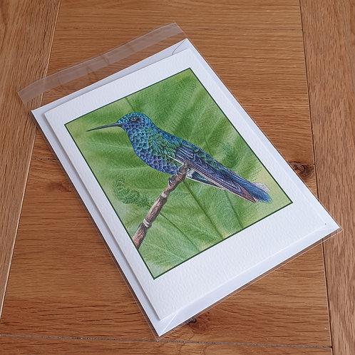 Hummingbird greeting card /wall art/notelet