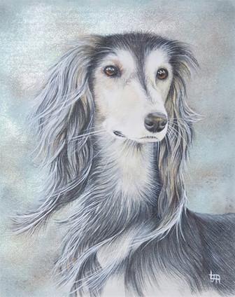 Portraits of Dogs - Kiki