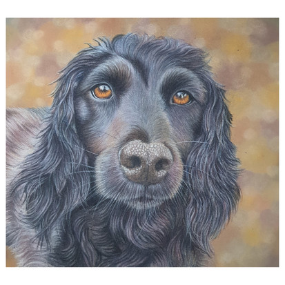 Terence the Spaniel