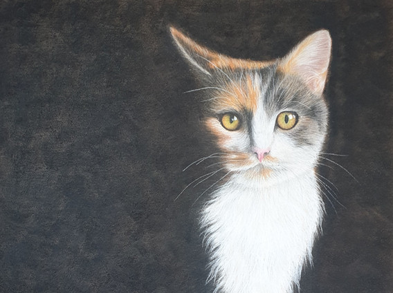 Painting of Cat - Crystal Light