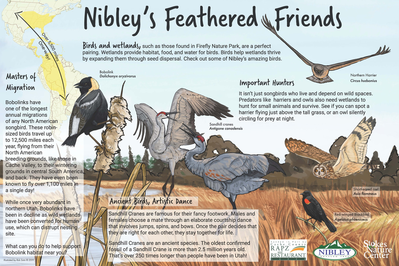 feathered_friends_outline_copy.jpg