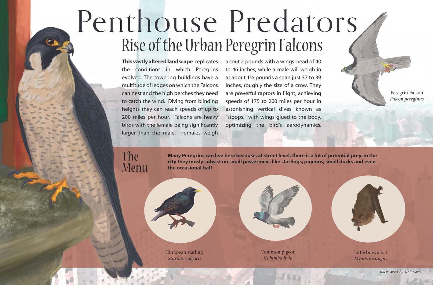Penthouse Predators interp. panel