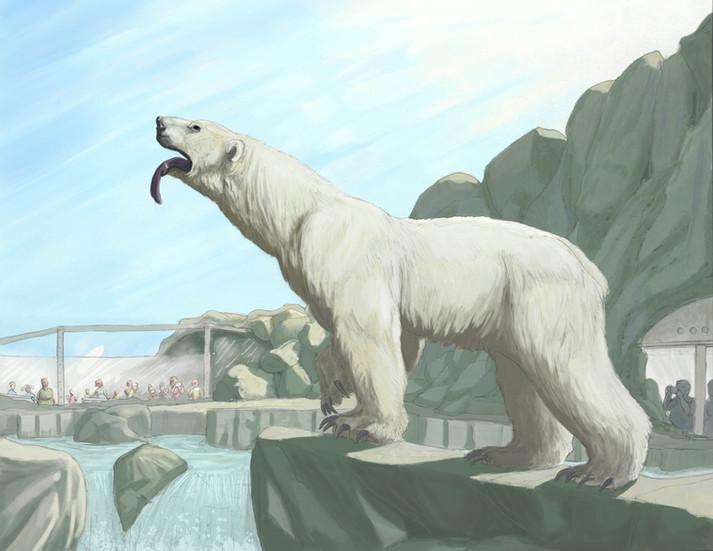 Ursus maritimus in New Mexico
