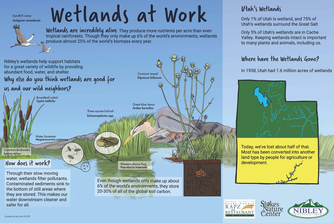 Wetlands_work_Outline_copy.jpg