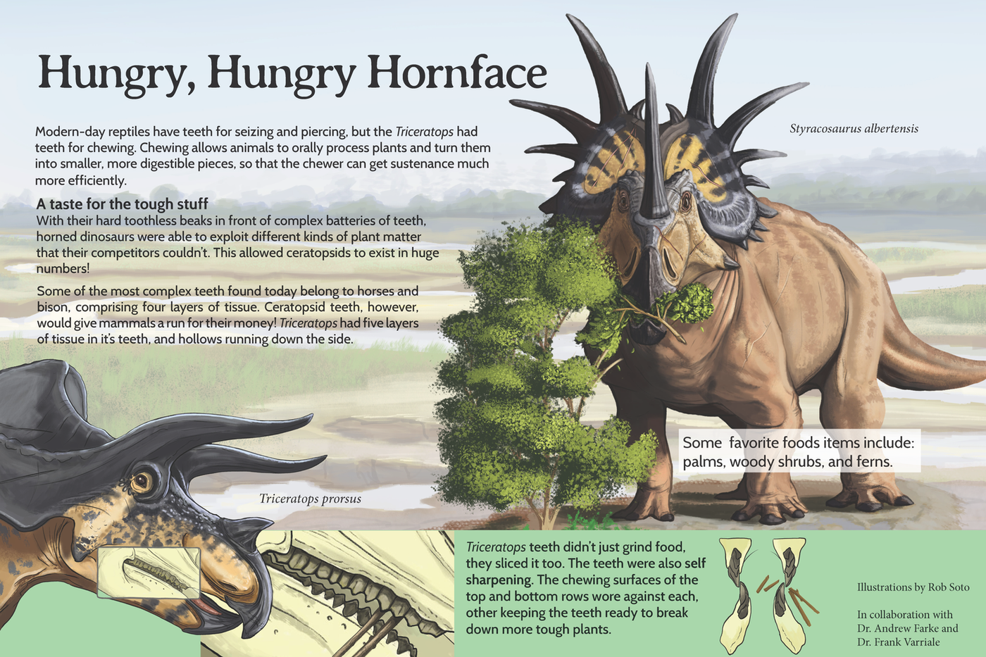 Hungry, hungry hornface