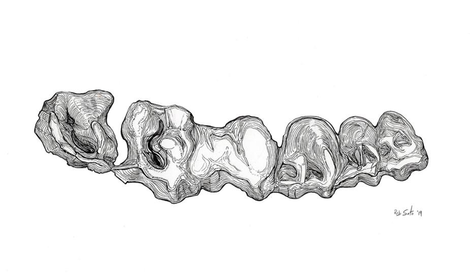 Rhino teeth