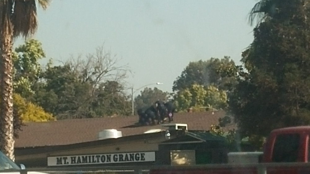 Police taking down a man on a roof