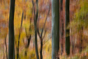 Herbstbuchen
