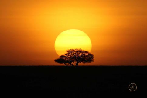 Serengeti Sunrise