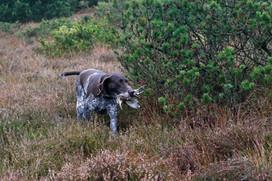 Jagd im Moor