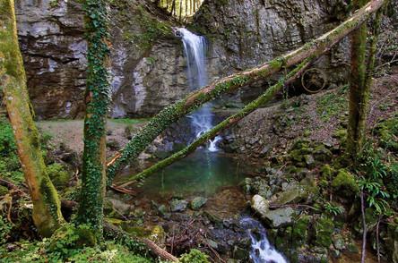 Schluchtwald