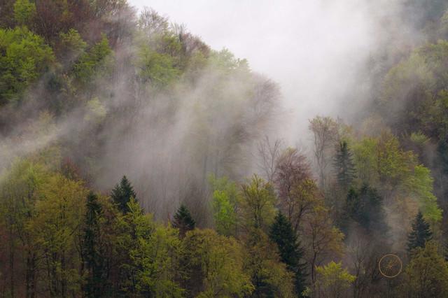 Frühlingswald mit Nebelschwaden