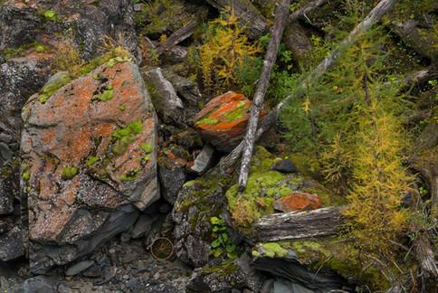Waldmosaik mit Totholz und Herbstlärchen
