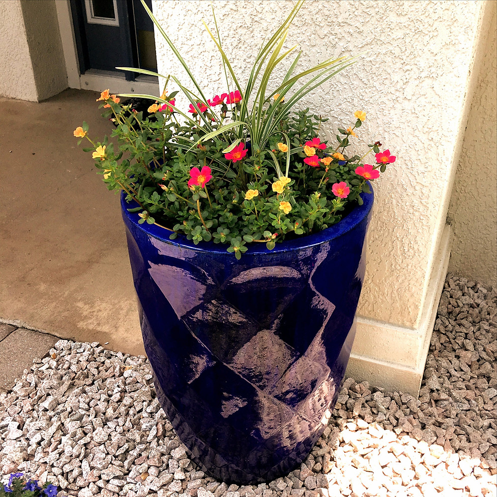 Potted plant by front door