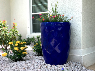 potted_plant_IMG-2906.jpg