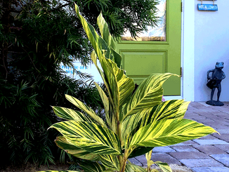 green_door_-ginger_lily_IMG_2595.png