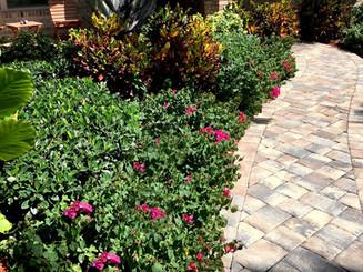 mature-plants-walkway.jpg