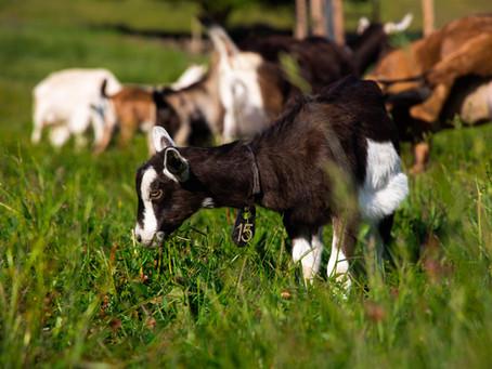Twisted Fields Awarded Healthy Soils Grant from Zero Foodprint