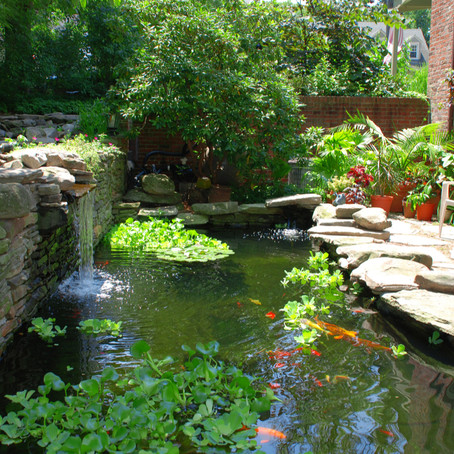 Why Investing in a Backyard Koi Pond is a Great Idea