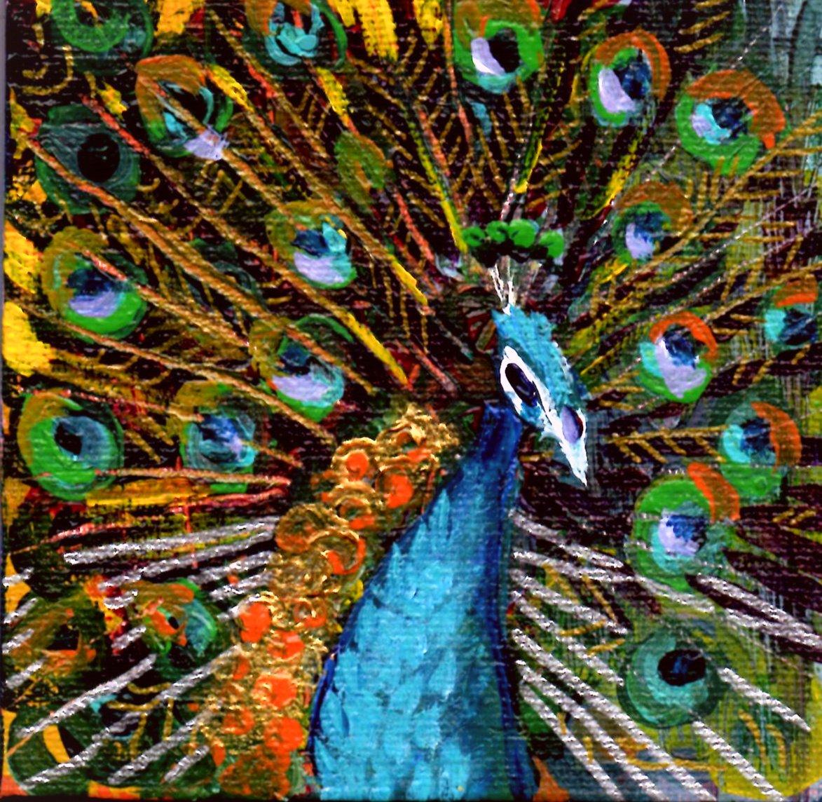 Evening Peacock