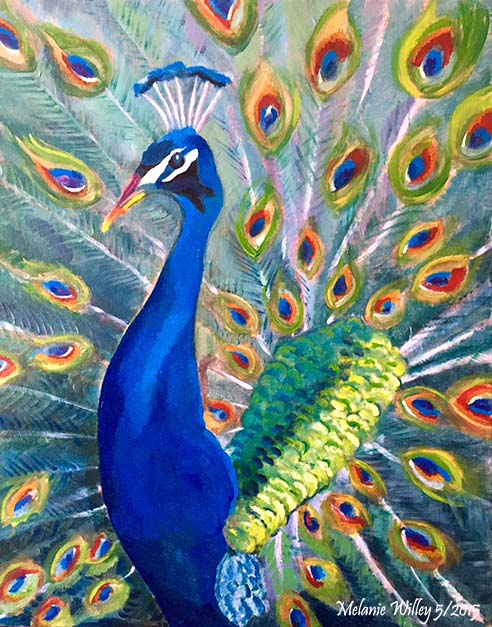 """Proud Peacock"" - nfs"