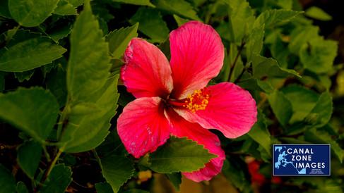 gamboaspurlinphoto08.jpg