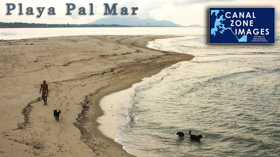 PalMar04 copy.jpg
