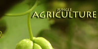 Cocle Agriculture