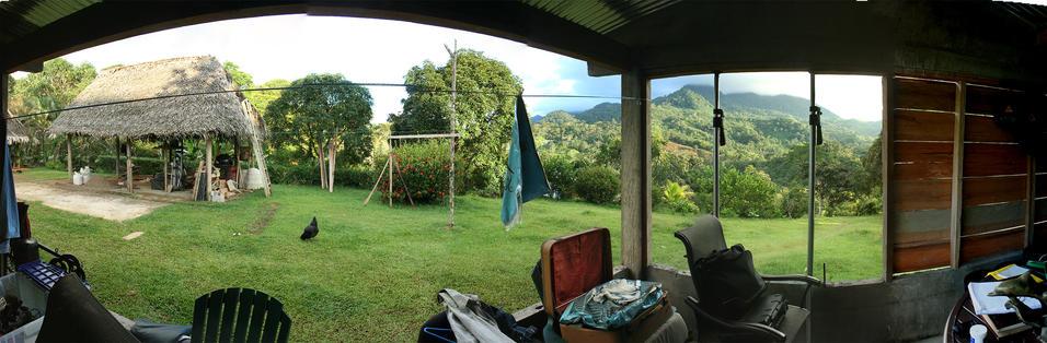 Jungle house phase 3.jpg
