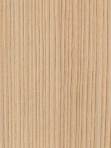 riga-birch.jpg