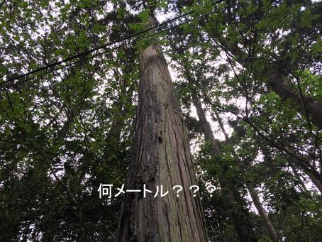 木がある生活