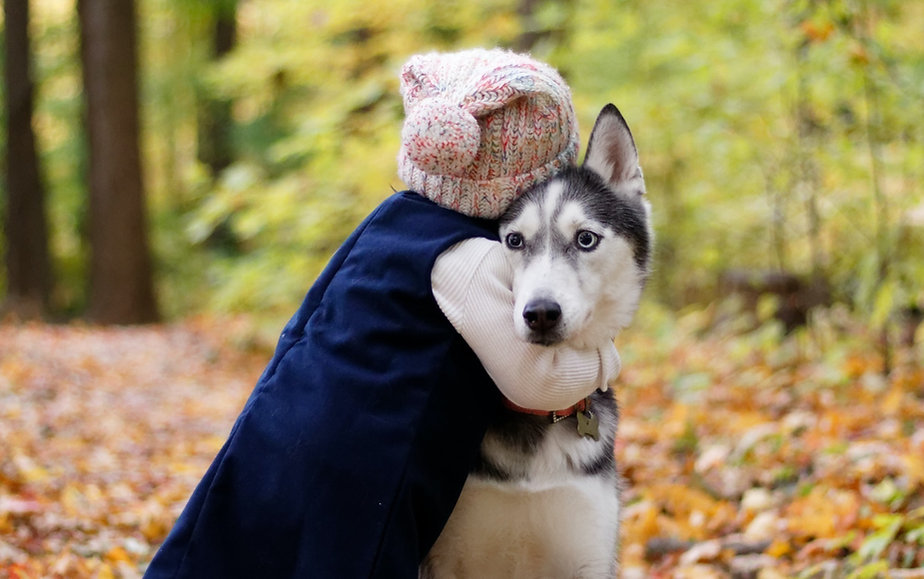 Pet husky dog cremation