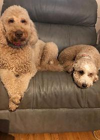 Sadie & Sully.JPG