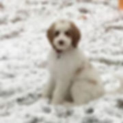 Zoey snow.jpg